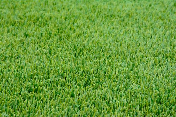Lawn Nutrition